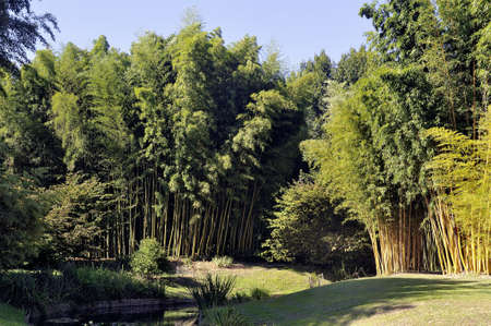 almost all: Park Anduze bamboo where almost all species are represented and promoted in an Asian garden Stock Photo