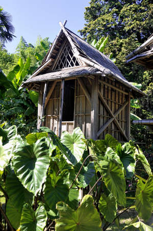 promoted: bamboo house in the park Anduze bamboo where almost all species are represented and promoted in an Asian garden Stock Photo