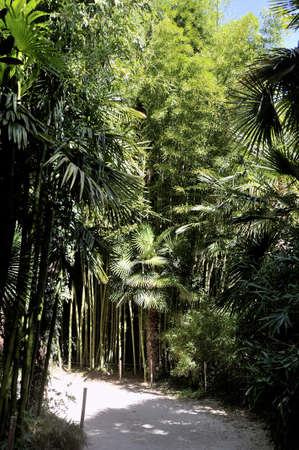almost all: An alley of the park bamboo Anduze where almost all species are represented. Stock Photo
