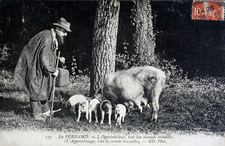 old postcard: old postcard, Perigord truffles search