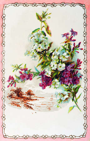 old postcard: old postcard for flower for all occasions