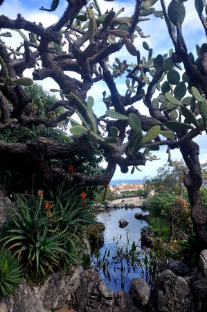 Visit the exotic garden of Monaco where there are huge collections of cacti and succulents Stock fotó