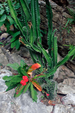 Visit the exotic garden of Monaco where there are huge collections of cacti and succulents