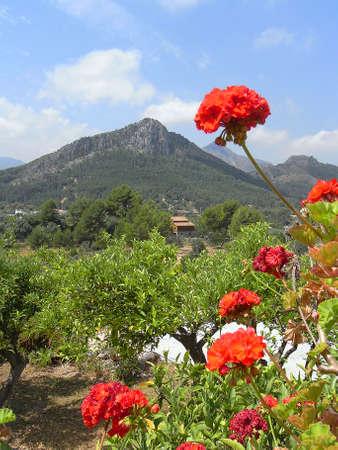 A typical garden in the village of Orba Spain                                            新聞圖片