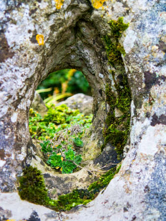 wharfedale: Moss growing on a Yorkshire stone wall in Grassington village Stock Photo