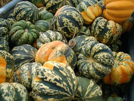 Pile of Freshly Harvested Gourds Stock Photo