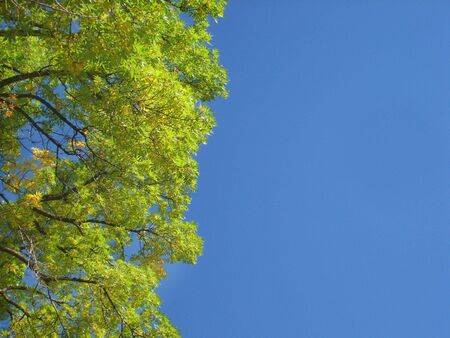 Green Tree Leaves and Sky                           Stock Photo