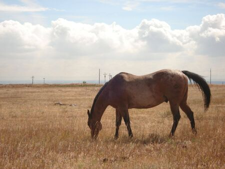 Brown Horse Stock Photo - 3737509