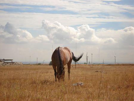 Single Brown Horse Stock Photo - 3737511
