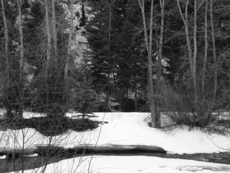 Forest and Stream in Black and White
