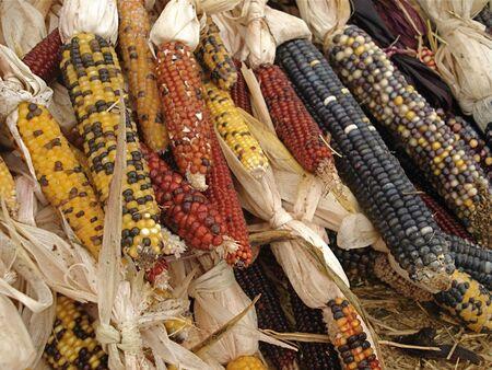 Indian Corn Display Stock Photo