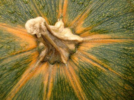 Green Pumpkin Stem