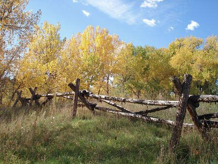 Fall Fence photo