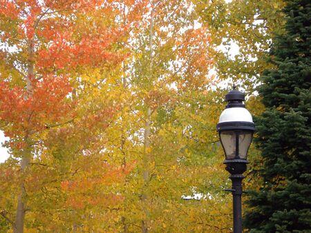 Aspen Foliage and Lamp