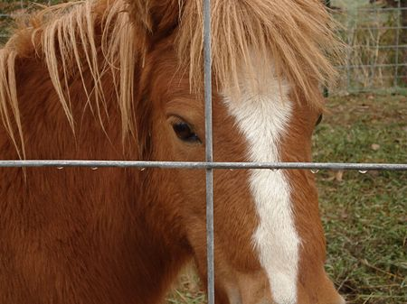 Little Brown Horse Stock Photo - 3773182