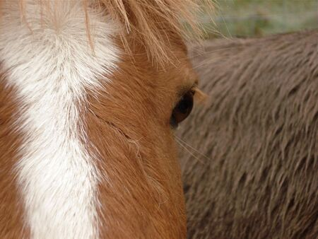 Horse Eye Stock Photo - 3773252