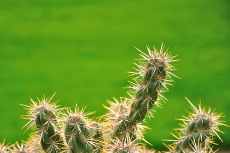 copy space: Cactus and Copy Space Stock Photo