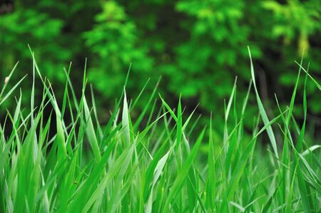 Green Grass and Trees Background Stock Photo