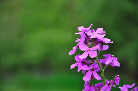 Purple Flowers against Green Background photo