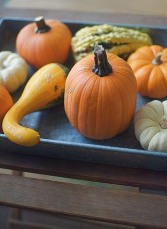 Gourds and Miniature Pumpkins Stock Photo
