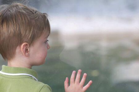 Little Boy Looking Through Glass