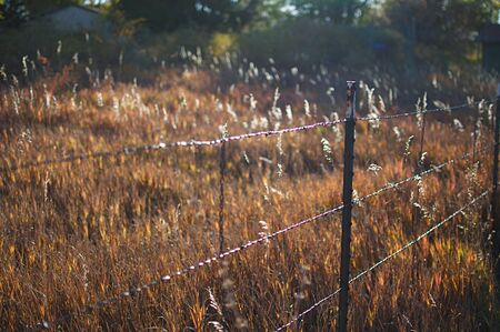 Barbed Wire Fence and Evening Meadow photo