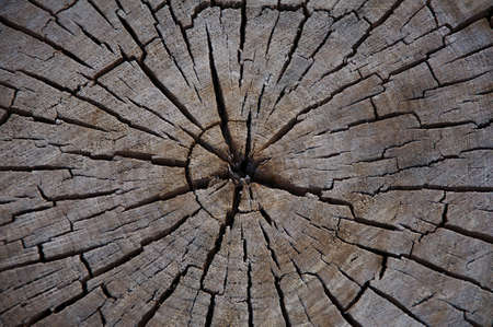 Cut Log Background