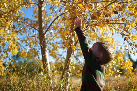 Autumn - Little Boy Reaching for Leaf Stock Photo