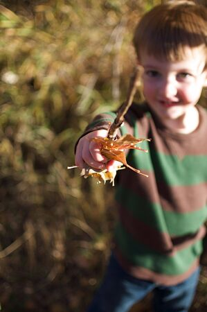 Autumn - Little Boy Holding Up Sticks and Leaves Stock Photo