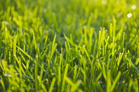 Summer Green Grass and Sunlight photo