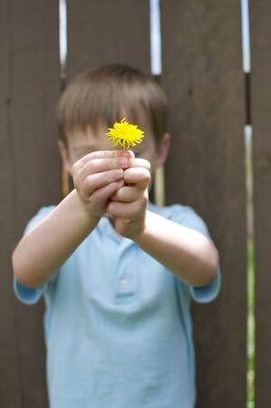 Little Boy Holding Flower photo