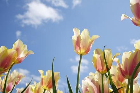 봄 - 튤립 판타지 스톡 콘텐츠 - 9167105