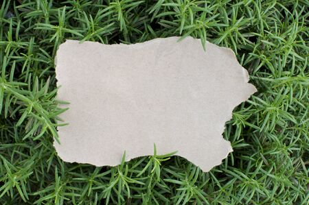 Blank Paper and Green Rosemary Background