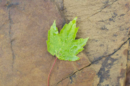 Background - Green Leaf and Rock