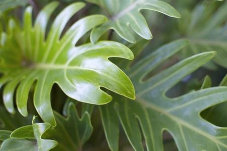 緑豊かな植物の背景の詳細 写真素材