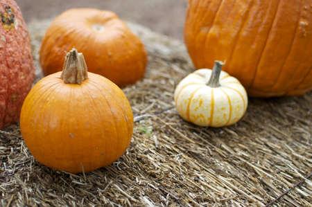 Autumn - Pumpkin Background Stock Photo