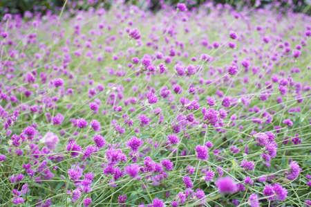 Little Purple Flower Background