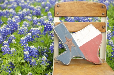 Bluebonnets and Texas