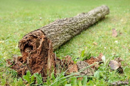 Decayed fallen tree laying on grass