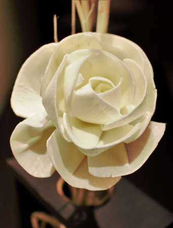 cor: white rose in subdued lighting