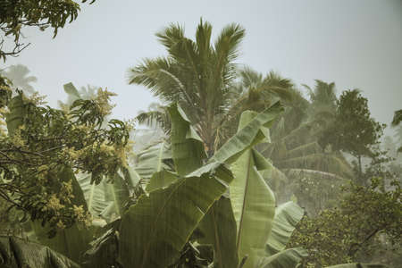exotically: Monsoon Rains in Sri Lanka