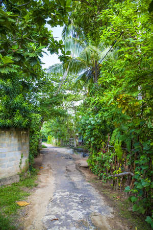 This photography shows a way in the jungle of the tropical island Sri Lanka, bordered with a splendid green garden with blossoms Stock Photo - 17850236