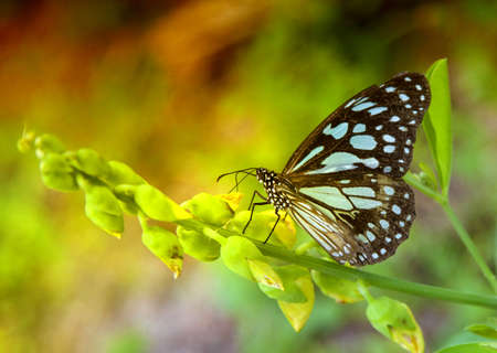 butterflies nectar: blue butterflies in a green garden searching for nectar by yellow flowers  Stock Photo