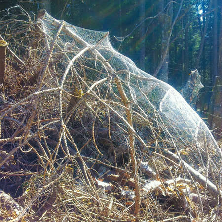 weave: spiderweb in the forest about a woodpile