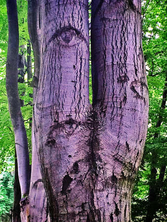 eye: tree with a knothole that looks like an eye