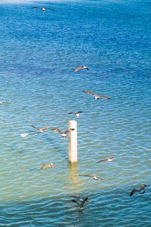 wheeling: seagulls are wheeling above the shining blue Atlantic Ocean in El Jadida in Morocco in Africa