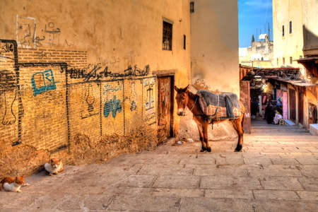 arab beast: A mule and two cats are resting in an alley in Fes in the African country Morocco and enjoys the silence Editorial