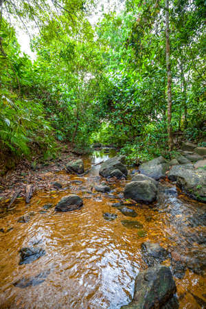 A big creek with a lot of stones and rocks and clear water flows through a jungle in the middle highland of Sri Lanka in the Indian Ocean Stock Photo