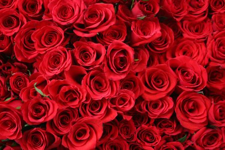 Red roses Stock Photo - 279754