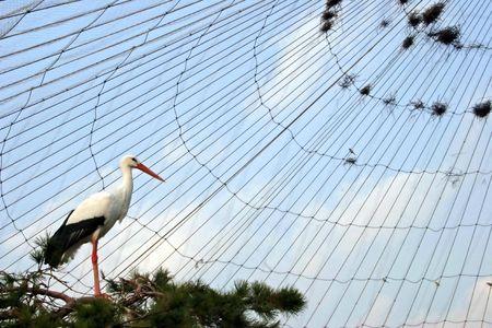 White bird in captivity photo